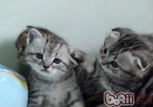 猫咪为什么厌食-成猫饲养