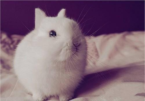 兔子不洗澡也保持干净的方法