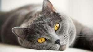 对猫毛过敏的症状都有哪些